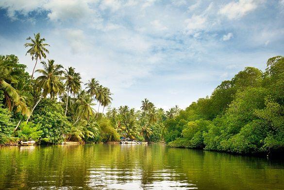 As 8 regiões naturais do mundo e suas características 8