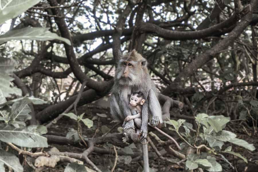 Selva seca: fauna, flora e características 1