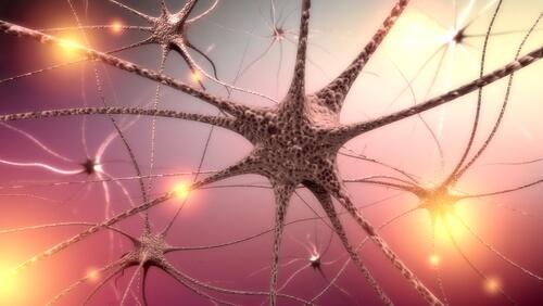 Bases biológicas do comportamento: sistema nervoso, cérebro 1
