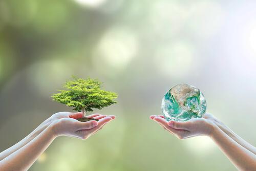 Sustentabilidade intelectual: características, eixos e exemplos 1