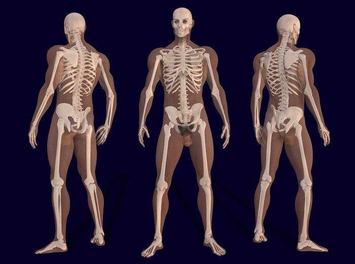 Os 12 sistemas do corpo humano (e como eles funcionam) 4