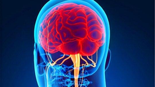 Sistema Nervoso Central (SNC): partes, funções e doenças 1