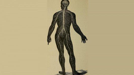 Sistema nervoso somático: partes, funções e características 1
