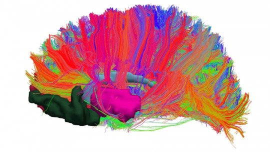 Sistema de recompensa cerebral: o que é e como funciona? 1
