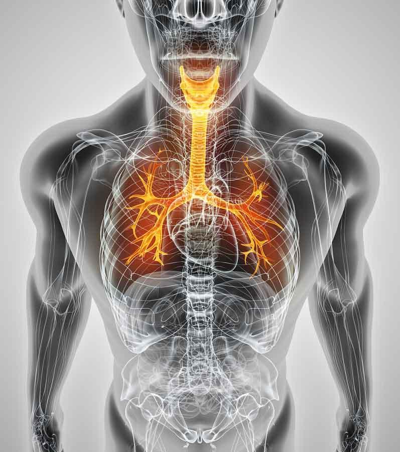 Sistema respiratório: funções, partes, funcionamento 5
