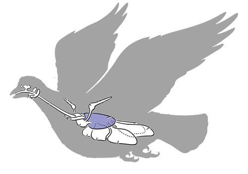 Respirar pássaros: estruturas e elementos 1
