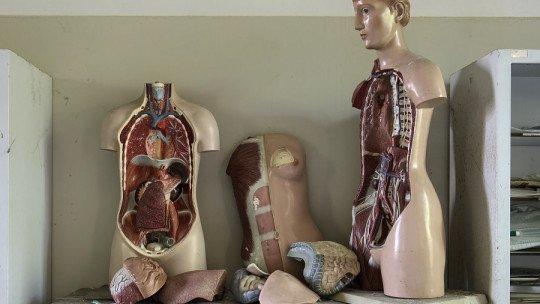 Os 12 sistemas do corpo humano (e como eles funcionam) 1