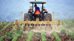 Paisagem agrícola: características, exemplos, diferenças com a paisagem urbana 11