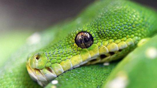 Sonhando com cobras: o que isso significa? 1