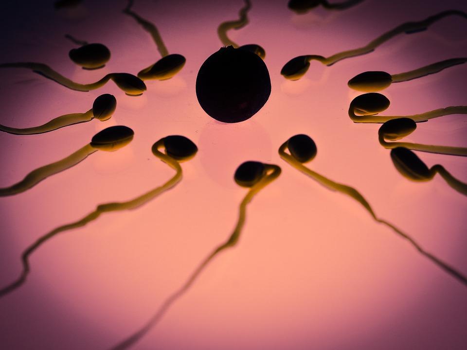 O que é anisogamia ou heterogamia? 1