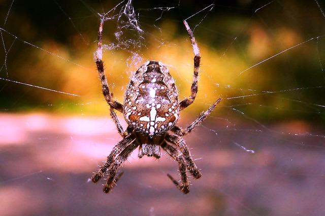 Aranha de jardim: características, habitat, reprodução 2