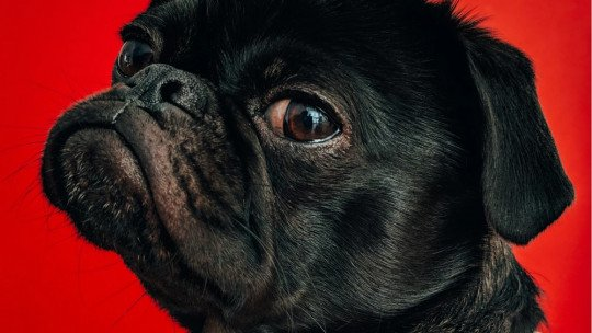 Como superar o medo de cães, em 4 etapas 1