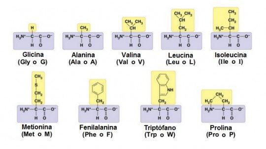 Tabela de aminoácidos: funções, tipos e características 1