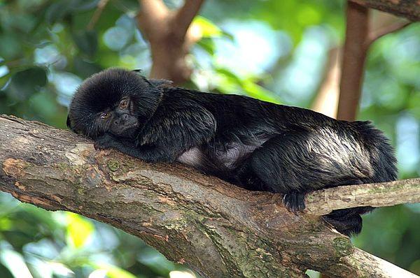 24 Animais em perigo de extinção no Peru 7
