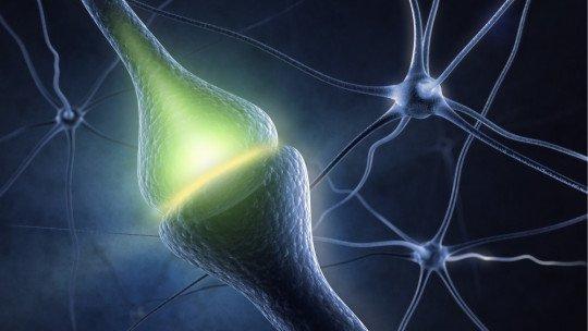 Taurina: efeitos desse neurotransmissor na atenção e no corpo 1
