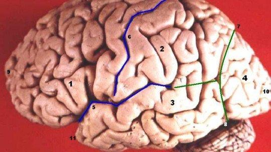 Transtorno de Déficit de Atenção e Hiperatividade (TDAH), também em adultos 1