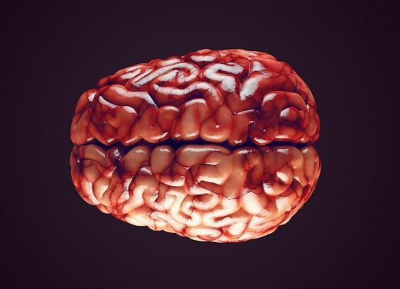 Hemisfério cerebral esquerdo: funções, características 8
