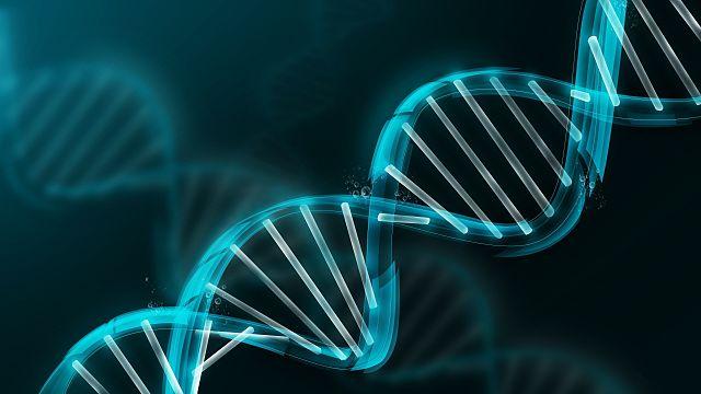 Teoria dos Cromossomos Sutton e Morgan 1