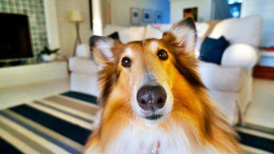 Os benefícios da terapia com cães 1