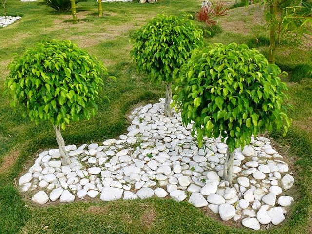 Ficus benjamina: características, reprodução, cuidados 7
