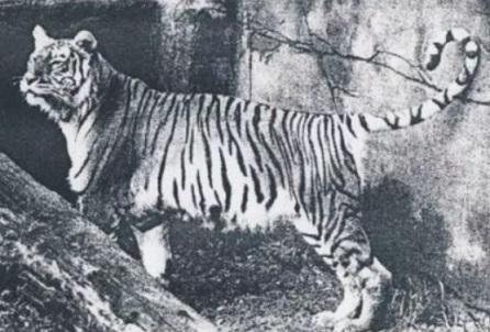 71 animais extintos em todo o mundo (e causas) 16