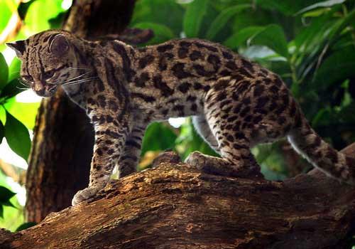 20 animais em extinção na Venezuela 14