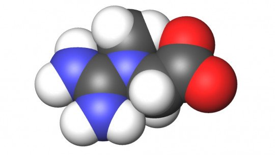 Os 9 tipos de creatina: propriedades nutricionais e usos alimentares 1