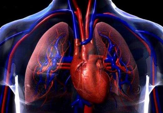 Quais são as funções vitais dos seres vivos? 4