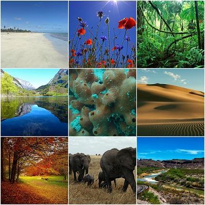 Os 14 tipos de ecossistemas no México mais comuns 1
