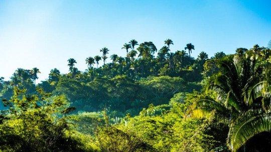 Os 6 tipos de ecossistemas: os diferentes habitats que encontramos na Terra 1