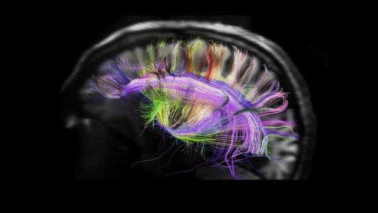 Os 7 tipos de testes neurológicos 1