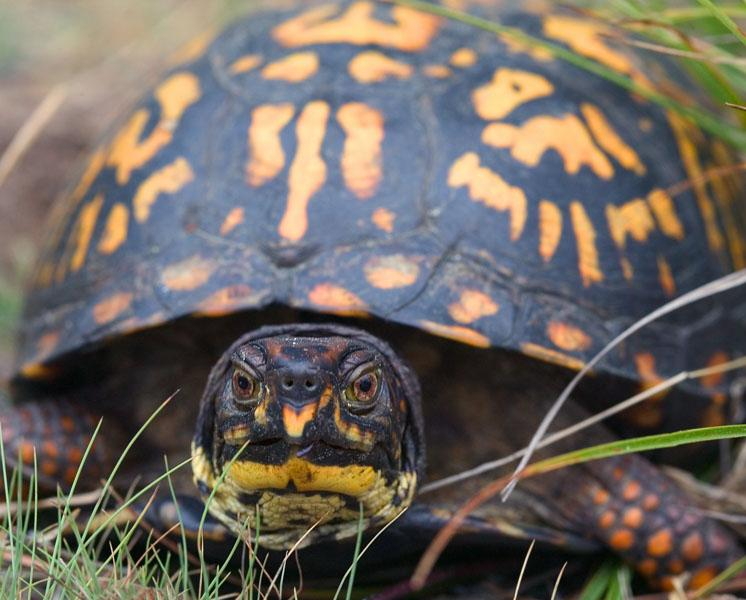 50 animais em perigo de extinção no México [com imagens] 8