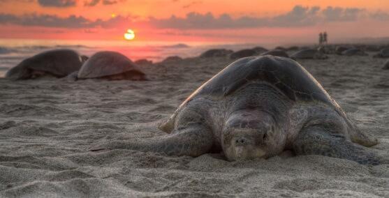 50 animais em perigo de extinção no México [com imagens] 20