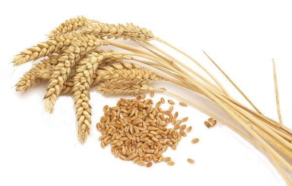 20 Alimentos que produzem gases e suas características 5
