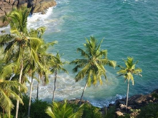 Cocos nucifera: características, habitat, usos, cuidados 1