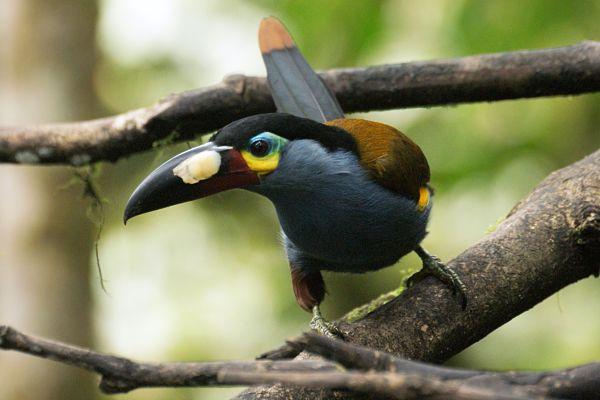 30 animais da serra equatoriana e suas características 1