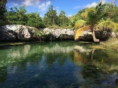 Flora e Fauna de Quintana Roo: Principais Características 1
