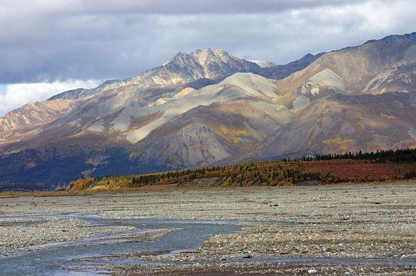 Flora e fauna da tundra: espécies representativas 1