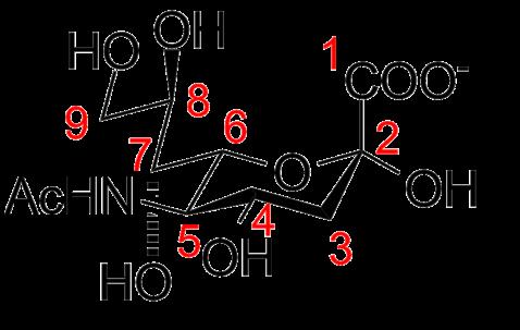 Ácido siálico: estrutura, funções e doenças 2