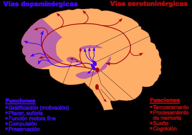 Serotonina: função, produção, estrutura 3
