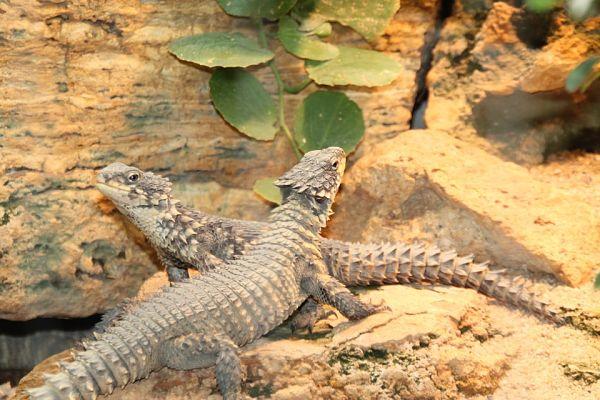 20 animais do deserto e suas características 6