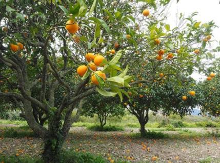 As 4 principais vantagens do cultivo de frutas 1
