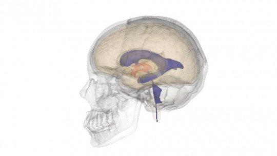 Ventrículos cerebrais: anatomia, características e funções 1