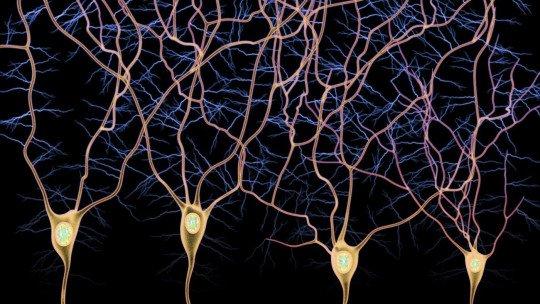 Vias aferentes e eferentes: tipos de fibras nervosas 1