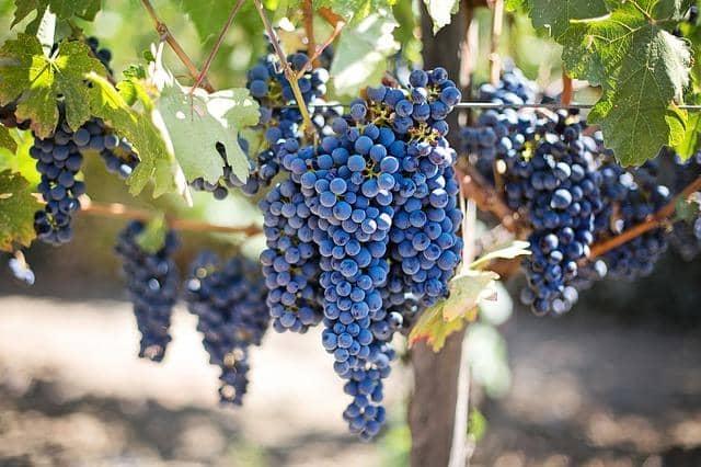 Os 5 tipos de frutas mais importantes 6