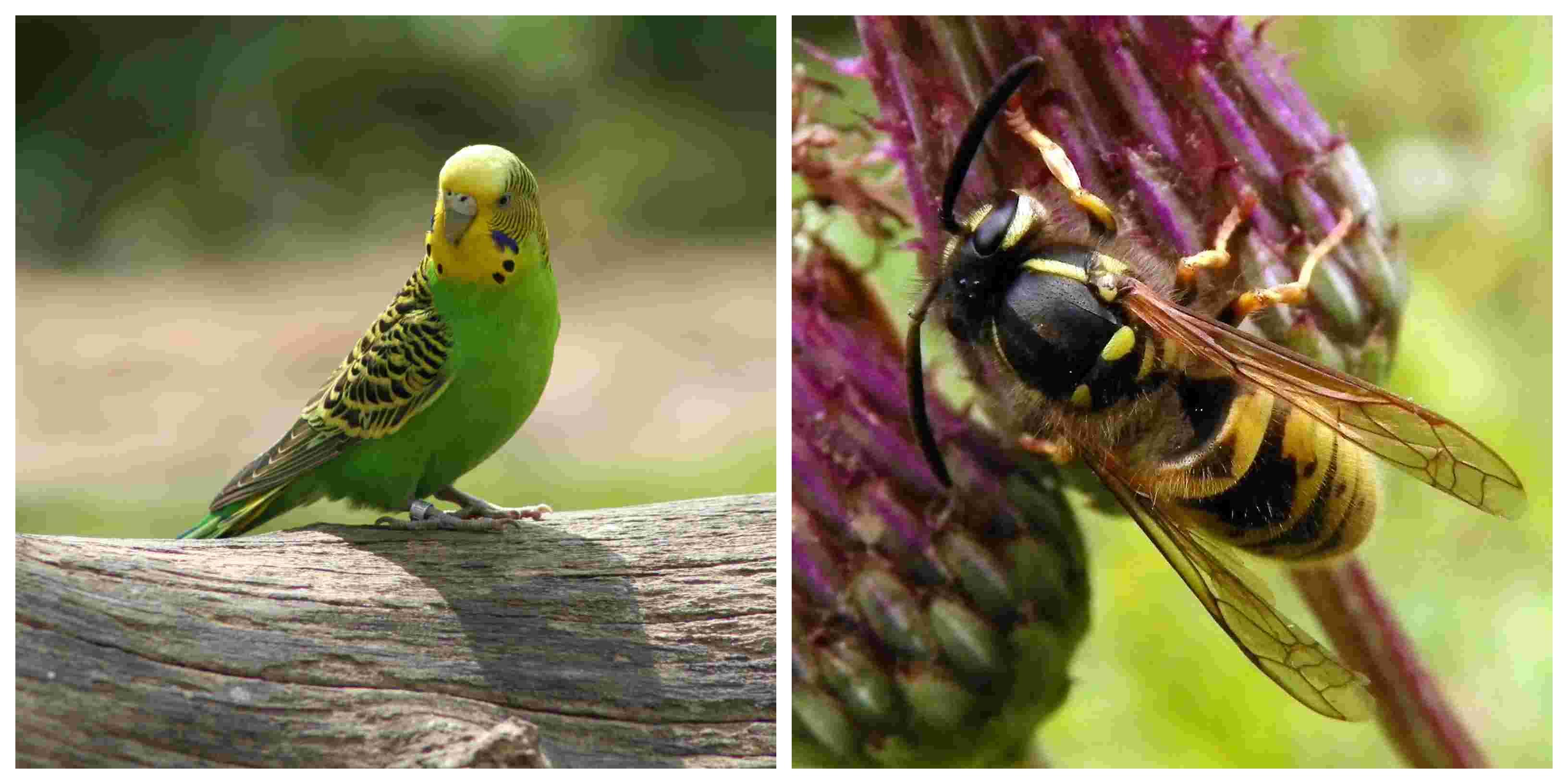 Animais aéreos: características e exemplos 1