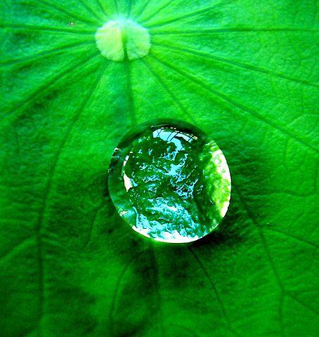 Tensão superficial: causas, exemplos, aplicações e experimentos 11
