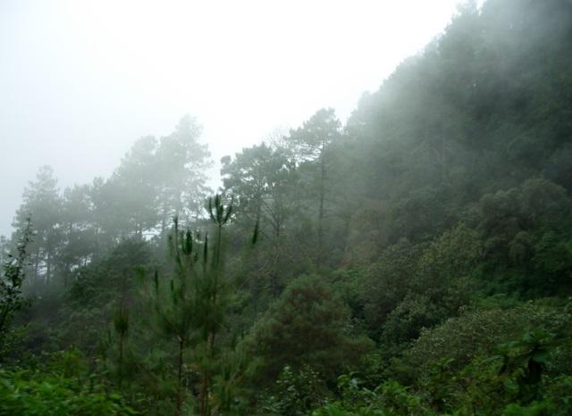 Os 7 recursos naturais mais destacados de Oaxaca 9