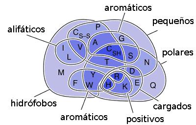 Os 20 aminoácidos das proteínas e suas funções