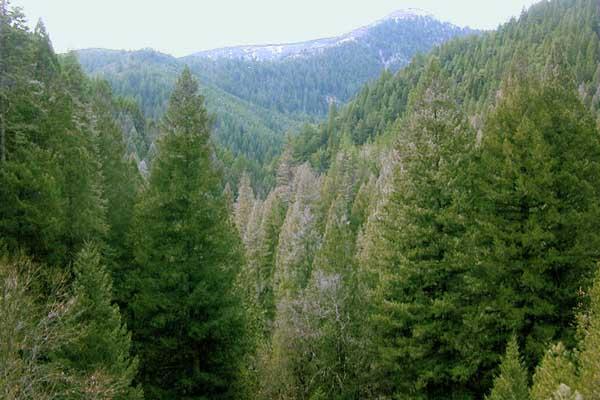 Floresta de coníferas: características, flora, fauna, clima, localização